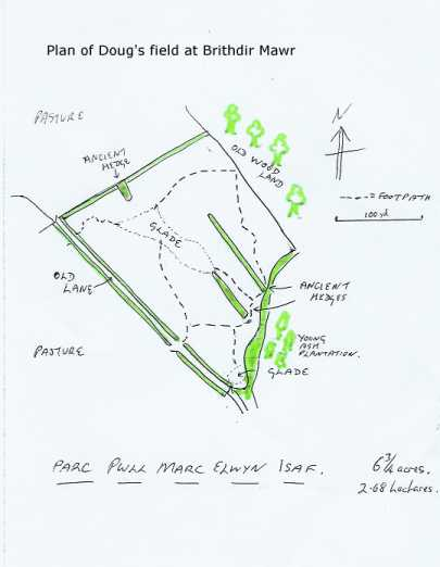 Plan of Doug's Field at Brithdir Mawr